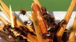 Ufersa ganha espaço para preservação de abelhas nativas no semiárido
