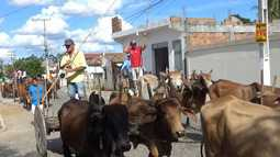 Festival reúne cerca de 200 carros de bois em Ribeira do Amparo