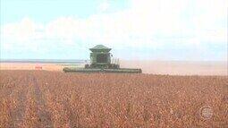 Produtores de grãos do cerrado do Piauí comemoram colheita farta em 2018