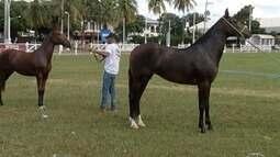 Exposição de cavalos Mangalarga Marchador começa nesta quinta-feira (26) em Montes Claros