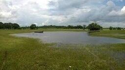 Região dos campos de Tracuateua cultiva tabaco e mandioca