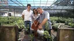 Pedro Leonardo e Cris Ikeda aprendem dicas de como preparar um bom chá.