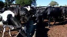 Criadores de gado reduzem custos com a alimentação dos animais no Triângulo Mineiro