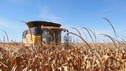 Avança a colheita do milho em Mato Grosso