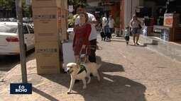 Projeto treina cães para guiar pessoas cegas, em Goiânia