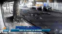 Susto: galhos de árvore caem em rua na região da Barra; veja como solicitar a poda