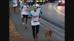 Cão acompanha atletas por mais de 40 Km em corrida entre Uberlândia e Romaria