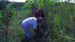 Casal de agricultores orgânicos de Saquarema, RJ, passa a fazer geleias e doces