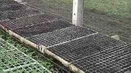 Produtores cadastrados de Campos, RJ, têm sementes distribuídas através de projeto