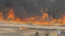 Rondônia está entre os estados com maior número de focos de incêndio