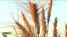 As vésperas da colheita, muitas áreas são consideradas ruins de acordo com o Deral