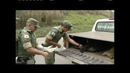 Animais feridos por atropelamento são levados para tratamento na Usipa, em Ipatinga