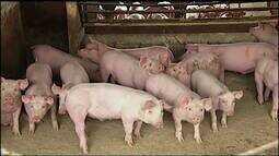 Situação de mercado preocupa criadores de suínos no Triângulo Mineiro