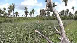 Mirante Rural mostra aumento do número de queimadas no Maranhão