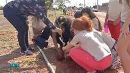 Em Campo Grande, desafio é arborizar bairros que a cidade não para de ganhar