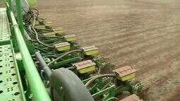 Plantio ainda é lento nos principais municípios produtores de soja
