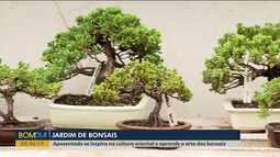 Aposentado aprende a cultura dos bonsais