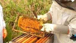Apicultores de Araruama mostram como evitar o pequeno besouro da colméia
