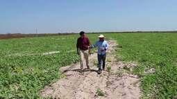 Fazendeiro produz quase 140 toneladas de melancia no litoral do Piauí