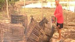 Confira os destaques do agronegócio no Maranhão
