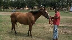 Cavalos de quatro de milha rendem bons negócios na Expoagro