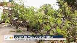 Mais de 50 árvores caem durante chuva em Goiânia