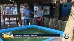 Projeto Tamar já registrou mais de 600 mortes de tartarugas marinhas este ano