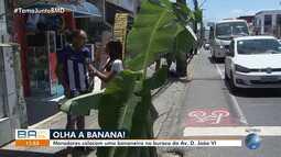Protesto inusitado: moradores colocam bananeira em buraco na Avenida Dom João VI