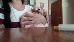 Vídeo de cachorrinha 'Bela' reclamando do remédio em Belém 'viraliza' na internet