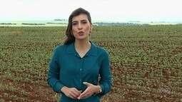 Chuva colabora com cultivo de soja, em Jataí