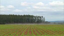 IBGE aponta Minas Gerais como estado que mais usa tecnologia de irrigação