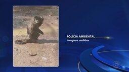 Macacos apreendidos após flagrante por tráfico de animais retornam para a natureza