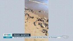 Peixes aparecem mortos na areia da praia de Santa Mônica, em Guarapari