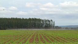 Irrigação e tecnologia oferecem vantagens a produtores rurais do estado de Minas Gerais