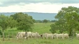 Os caminhos da lucratividade na pecuária
