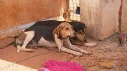 Cadela morre enforcada por coleira após ser amarrada pelo dono em Itapetininga