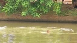 Mulher é flagrada nadando na Represa Municipal de Rio Preto
