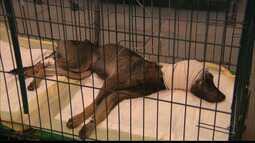Cachorro é esfaqueado pelo dono em Santa Rita