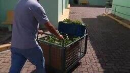 Projeto ajuda instituições de Valadares com doações de hortaliças