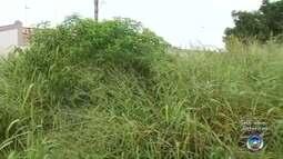 Moradores de Araçatuba reclamam de mato alto na cidade