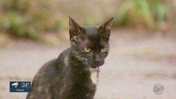 Cresce o número de pessoas que escolhem o gato como bicho de estimação