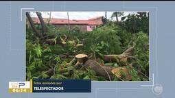 Árvores são cortadas de praça no bairro Saci