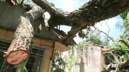Casa fica interditada depois de queda de árvore, em Foz do Iguaçu