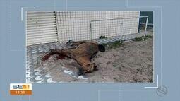 Cavalo com sinais de maus-tratos é abandonado na Barra dos Coqueiros