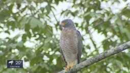 Você no TG: Veja flagras de aves de rapina na natureza