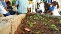 Projeto 'Horto na Escola' de Búzios, RJ, ensina crianças a plantar e lidar com a terra