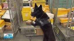 Cães farejadores ajudam a Polícia Federal na apreensão de drogas no Porto de Santos