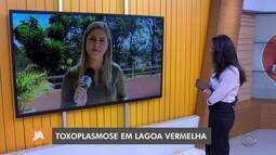 Lagoa Vermelha tem dez casos de toxoplasmose em crianças confirmados