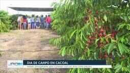 Colheita do café começa em Rondônia e estado deve ter 2 milhões de sacas
