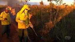 Bombeiros e brigadistas registram queimadas na vegetação, em Goiás